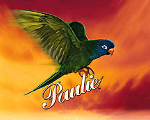 Species Showcase - The Blue-Crowned Conure - PetStation